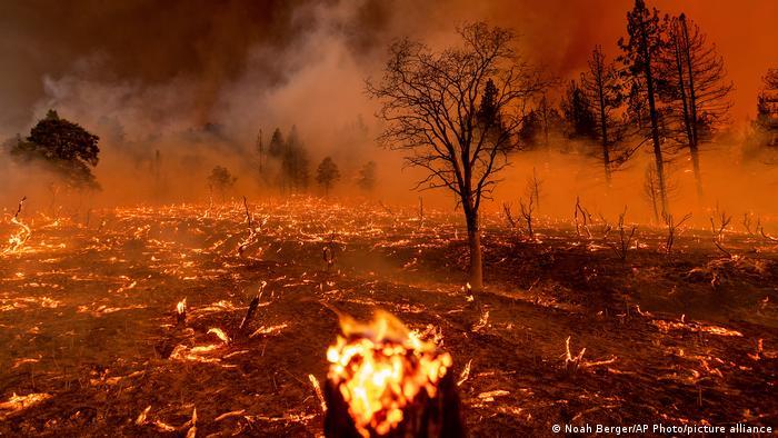 Abgebrannte Bäume, noch immer Feuer