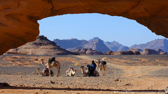 At least five camels and one person in the Sahara desert in Liby