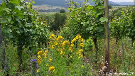 The Brauneberg-Mandelgraben vineyard