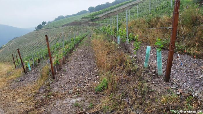 Horizontal transverse terraces at the vineyards in Höllenberg