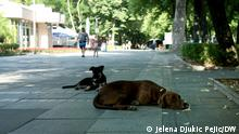 The dogs lie in the shade on an empty pedestrian street today in the center of Nis, 14. 07. 2021. Tropical temperatures were measured in all cities in Serbia.