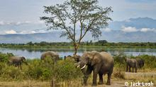 A serious cause for concern is the wildlife inhabiting the area. Some drilling will take place within Murchison Falls National Park which is home to elephants, leopards, lions and giraffes, as well as more than 450 bird species, from blue-headed coucals to red-throated bee-eaters. Environmentalists are worried about the impact that oil drilling could have on animals here, especially in the event of a spill.