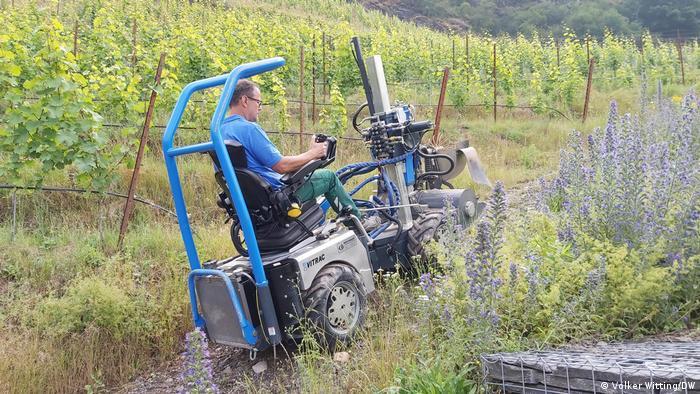 A man in an agricultural machine working near a vineyard
