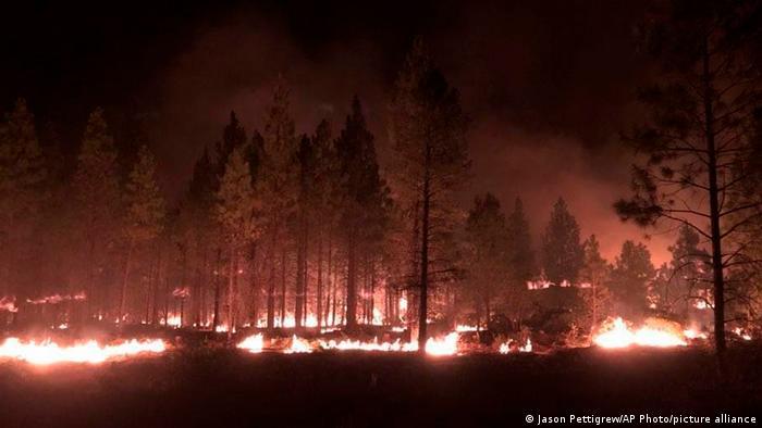 Лісові пожежі в США