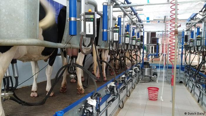 Bangladesch | Dutch Dairy Farm in Munshiganj
