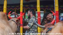 July 17, 2021: The biggest holy festival of Muslims Eid Ul Adha is approaching. A cow owner paints his cow's horns in colorful colors at Eid The Cattle Market in Kazir Bazar, Sylhet, Bangladesh (Credit Image: © Md Rafayat Haque Khan/ZUMA Press Wire