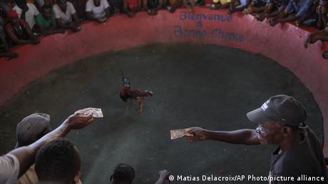 Borba pjetlova na Haitiju
