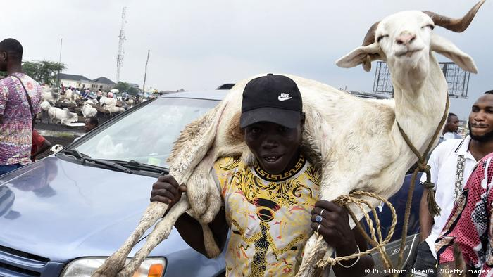 د حج په اوج کې په اسلامي هیوادونو کې قرباني کیږي. دغه انځور په نایجیریا کې اخیستل شوی چې یو کس د قربانۍ له پاره څاروی اخیستی.