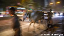***ACHTUNG: Bild nur zur mit Mortuza Rashed abgesprochenen Berichterstattung verwenden!*** via Faisal Ahmed Cattle markets is in full swing in Dhaka, Bangladesh to celebrate Eid-al-Adha. Photo: Mortuza Rashed/DW 31/08/2017