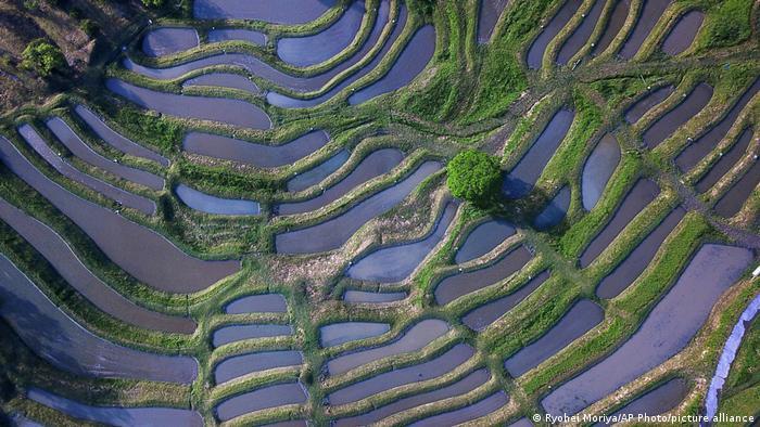Luftbild der Reisterrassen von Oyama Senmaida in Japan
