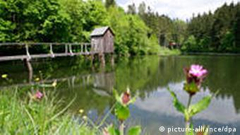A pond in the Upper Harz region