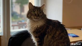 Уршуля - редакционная кошка Еврорадио