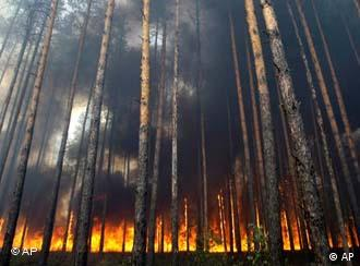 burning trees in Russia