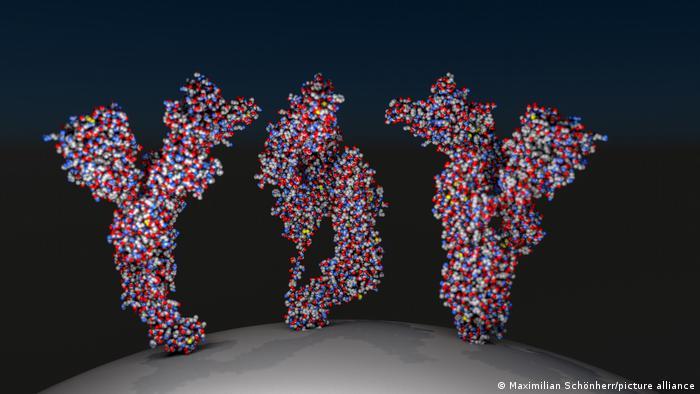 The three-spiked protein of the coronavirus