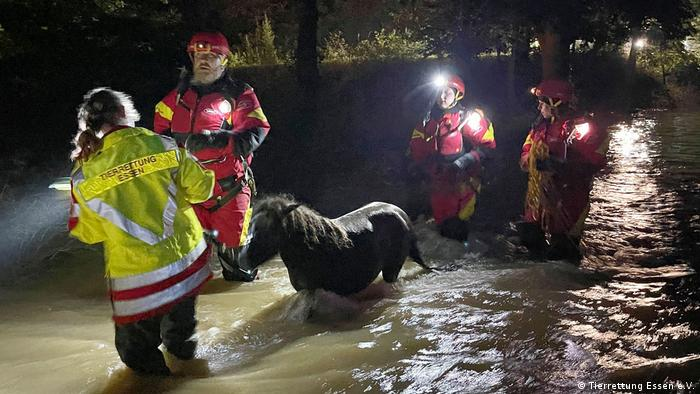 Quatro pessoas na água puxando um pônei