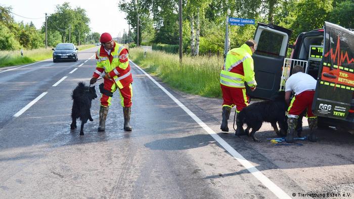 Порятунок собак у Німеччині
