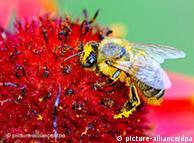 Los pesticidas derivados de la nicotina son mortales para las abejas.