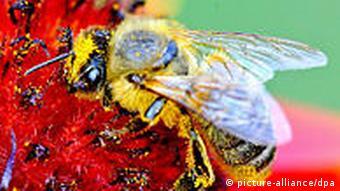 Fotografie Geschichte Makroaufnahme Biene