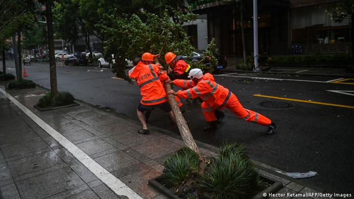 Workers attempt to move a fallen tree due to strong winds in Ningbo, eastern China's Zhejiang province,