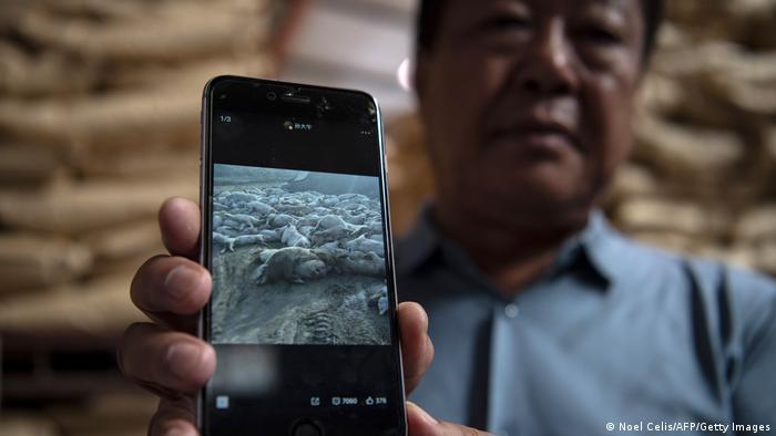 Sun Dawu zeigt ein Handy mit einem Foto von toten Schweinen