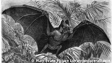 (desmodus rotundus) The American Vampire Bat thrives on warm-blooded creatures, humans included, from which it will suck 25ml of blood in 30 minutes. Date: circa 1870 (Mary Evans Picture Library)    Nur für redaktionelle Verwendung