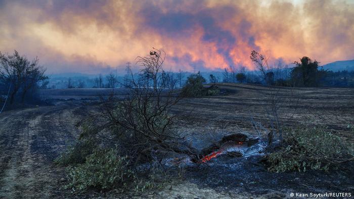 Вигорілий ліс неподалік від Манавгата