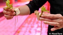 Aquaponic Farm des Start-Ups Phood Farm in einer alten Milchfabrik in Eindhoven, Niederlanden. Pflanzen wachsen in Wasser, was mit Nährstoffen aus Fischexrementen angereichert ist. Sie filtern das Wasser, das saubere Wasser wird zurück in den Fischteich gepumpt. ©Phood farm