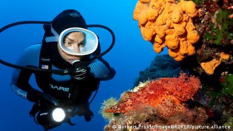 Una esponja naranja actual (Agelas oroides) se encuentra en la costa de Corfú (Grecia). Las investigaciones sugieren que las esponjas podrían haber vivido en la Tierra hace 890 millones de años.