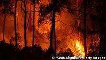 Türkei | Waldbrände | Marmaris