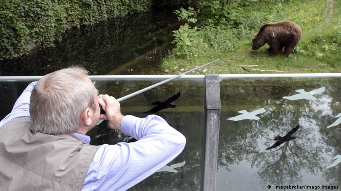 A zoo director shoots a brown bear with anaesthetic in Germany