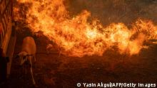 TOPSHOT - A sheep is covered with flammes coming from an advancing fire on August 2, 2021 in Mugla, Marmaris district, as the European Union sent help to Turkey and volunteers joined firefighters in battling a week of violent blazes that have killed eight people. - Turkey's struggles against its deadliest wildfires in decades come as a blistering heatwave grips southeastern Europe creating tinderbox conditions that Greek officials blame squarely on climate change. The fires tearing through Turkey since July 28 have destroyed huge swathes of pristine forest and forced the evacuation of panicked tourists from seaside hotels. (Photo by Yasin AKGUL / AFP) (Photo by YASIN AKGUL/AFP via Getty Images)