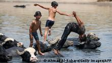 TOPSHOT - Iraqi boys swim with a herd of buffaloes in the Diyala River in the Faziliah district, east of Baghdad on August 2, 2021, amid extreme summer temperatures. - As Iraq bakes under a blistering summer heat wave, its hard-scrabble farmers and herders are battling severe water shortages that are killing their animals, fields and way of life. (Photo by AHMAD AL-RUBAYE / AFP) (Photo by AHMAD AL-RUBAYE/AFP via Getty Images)