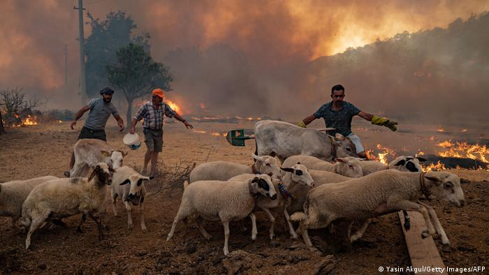 Farmers in Turkey try to protect their sheep as fires gripped the country