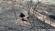 03.08.2021, Waldbrände in Kocani, Nord Mazedonien. ***Die Bilder dürfen für die Beiträge von Deutsche Welle benutzt werden.***