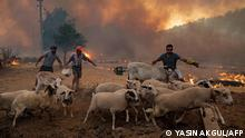 TOPSHOT - Men gather sheeps to take them away from an advancing fire on August 2, 2021 in Mugla, Marmaris district, as the European Union sent help to Turkey and volunteers joined firefighters in battling a week of violent blazes that have killed eight people. - Turkey's struggles against its deadliest wildfires in decades come as a blistering heatwave grips southeastern Europe creating tinderbox conditions that Greek officials blame squarely on climate change. The fires tearing through Turkey since July 28 have destroyed huge swathes of pristine forest and forced the evacuation of panicked tourists from seaside hotels. (Photo by Yasin AKGUL / AFP)