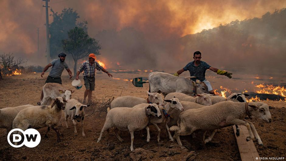 Europe is burning: Four reasons why