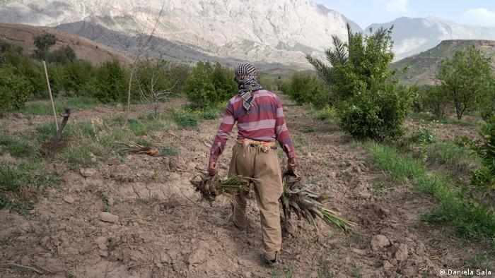 La agricultura sufre la sequía en la región del Kurdistán iraquí.