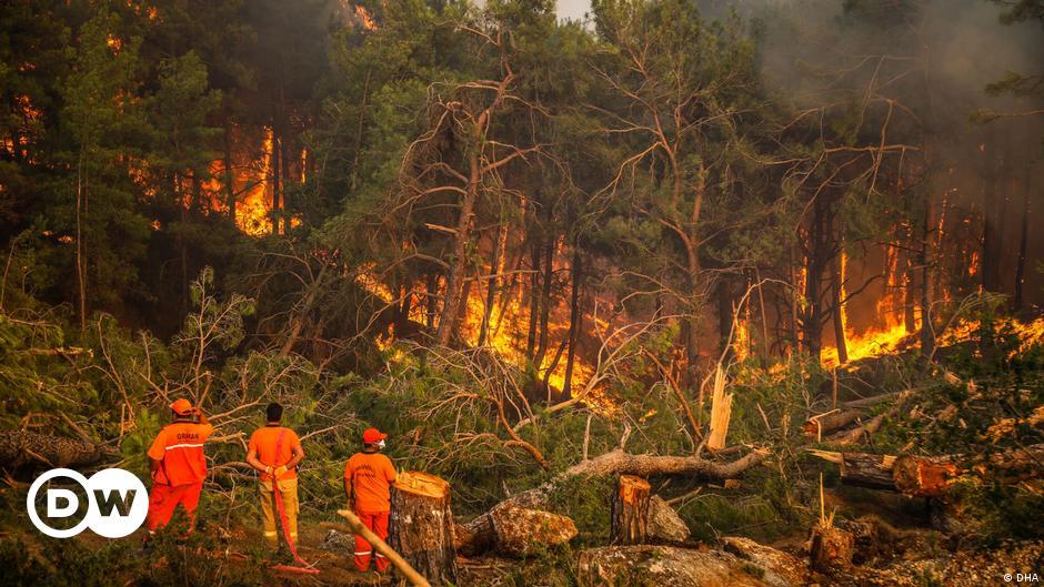 """Waldbrände in der Türkei: """"Es werden 50 Jahre vergehen"""""""