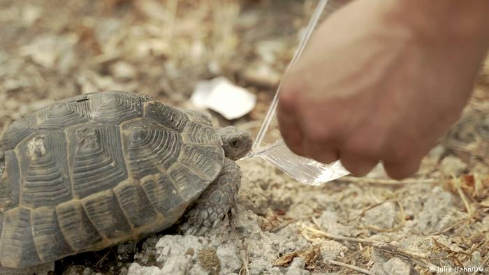 An aid worker gives a tortoise a drink of water after rescuing it from wildfires in Turkey