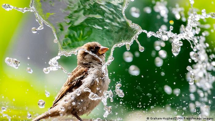 Vrabac i vodoskok
