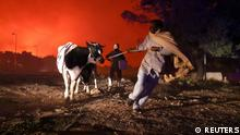 Locals evacuate the area with their animals as a wildfire rages in the suburb of Thrakomakedones, north of Athens, Greece, August 7, 2021. REUTERS/Giorgos Moutafis TPX IMAGES OF THE DAY
