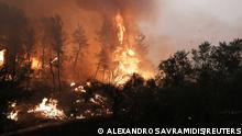 Flames rise, as a wildfire burns, in the village of Gouves, on the island of Evia, Greece, August 8, 2021. REUTERS/Alexandros Avramidis