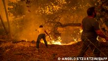 TOPSHOT - Local residents fight the wildfire in the village of Gouves on Evia (Euboea) island, second largest Greek island, on August 8, 2021. - Hundreds of Greek firefighters fought desperately on August 8 to control wildfires on the island of Evia that have charred vast areas of pine forest, destroyed homes and forced tourists and locals to flee. (Photo by ANGELOS TZORTZINIS / AFP)