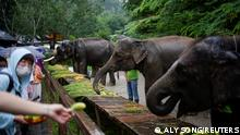 Tourists feed fruit to tamed elephants at the Wild Elephant Valley in Xishuangbanna Dai Autonomous Prefecture, Yunnan Province, China, July 6, 2021. Picture taken July 6, 2021. REUTERS/Aly Song