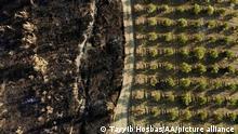 ANTALYA, TURKEY - AUGUST 10: A drone photo shows damaged sites affected by wildfires in Karaoz neighborhood of Manavgat district, Antalya, Turkey on August 10, 2021. Tayyib Hosbas / Anadolu Agency