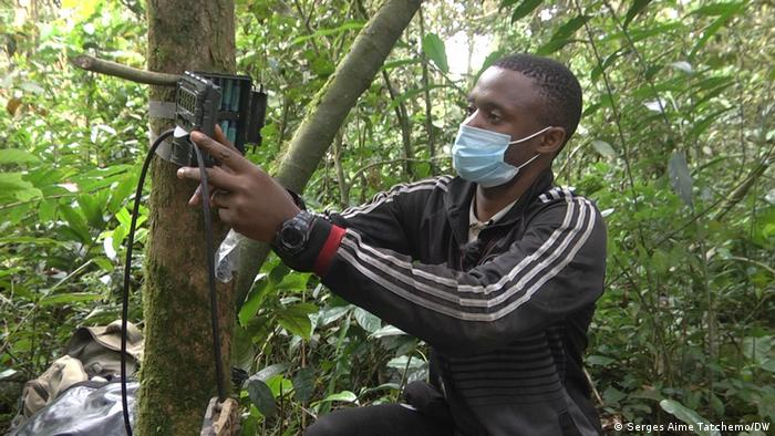 Setting up a camera trap, Ebo Forest Research Project, Cameroon