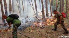 Waldbrand im Süden Bulgariens, in der Nähe vom Dorf Jugowo in den Rhodopen