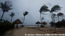 Palm trees are buffeted by the winds of Hurricane Grace in Playa del Carmen, Quintana Roo state, Mexico, Thursday, Aug. 19, 2021. The Category 1 storm made landfall at 4:45 a.m., just south of the ancient Mayan temples of Tulum, pelting the Caribbean coast with heavy rain and pushing a dangerous storm surge. (AP Photo/Marco Ugarte)