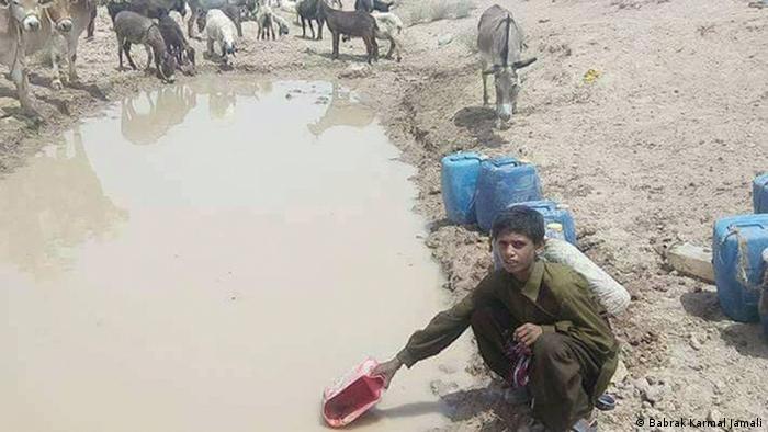 Belutschistan | Klimawandel: Tiere und Menschene trinken aus dem selben Wasser