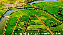 July 16, 2021, Zhangye, Zhangye, China: In the early morning of July 15, 2021, the rice field landscape area of Xinhe Pastoral Complex, Wujiang Town, Ganzhou District, Ganzhou District, Zhangye City, Gansu Province, is set against the morning fog of the morning sun. The paintings of colorful rice fields are vivid, and the pastoral and ecological beautiful scenery are displayed in front of people... Xinhe Pastoral Complex, Wujiang Town, Ganzhou District, Zhangye City, Gansu Province, is located in Yuanfeng Village, Wujiang Town, covering an area of 1,200 acres. The rice painting is based on the theme of ''Silk Road Water Village·Rice Painting Pastoral'' and is composed of colorful rice planting The giant painting presents the rural scenery and natural ecological beauty of the symbiosis of fish and rice... It is reported that this area is a low-lying wetland and farmland with severe salinization. It is used to drain the farmland and control alkali, and carry out high-standard farmland remediation. Ganzhou District, Zhangye City, Gansu has built agricultural planting + three-dimensional breeding, circular agriculture + creative agriculture. +Leisure agriculture, ecological science popularization + rural leisure as one of the Silk Road Water Village Eco-agriculture Demonstration Park, which perfectly blends farmland improvement and art, and achieves a win-win situation of economic, social and ecological benefits. (Credit Image: © SIPA Asia via ZUMA Wire